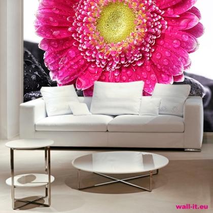 fototapeta do salonu pokoju kwiat kamienie krople wody