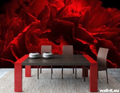 fototapeta kwiaty czerwona